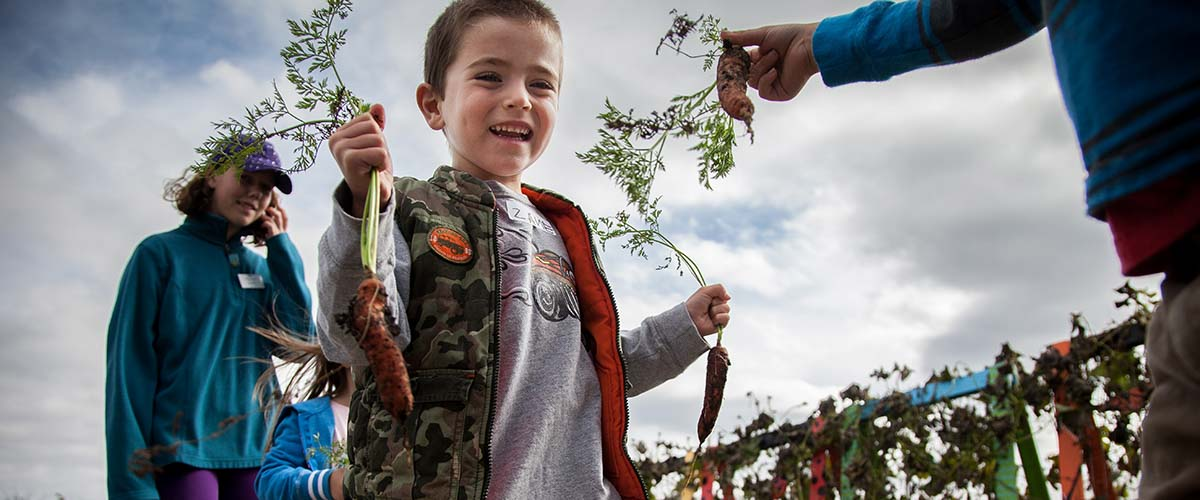 Child with fresh picked carrots