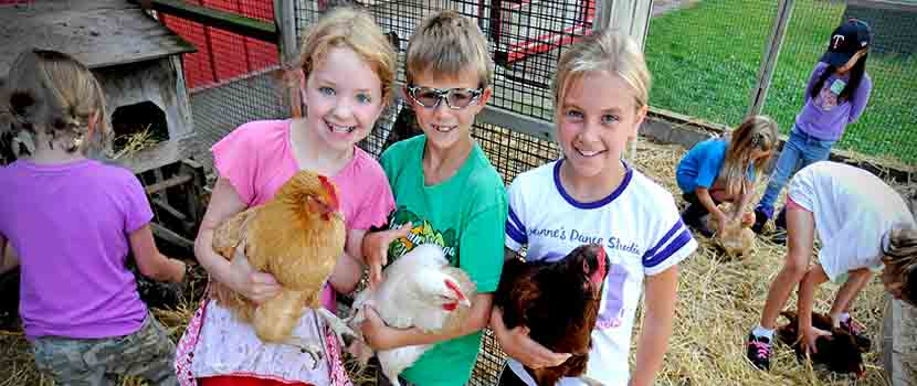children with chickens at gale woods farm