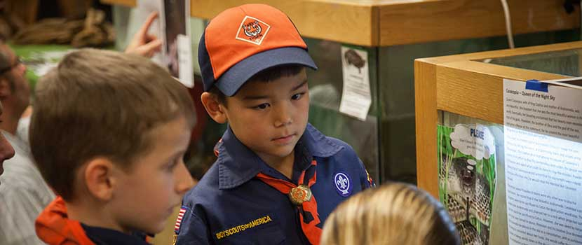Boy scouts look at animals in an aquarium